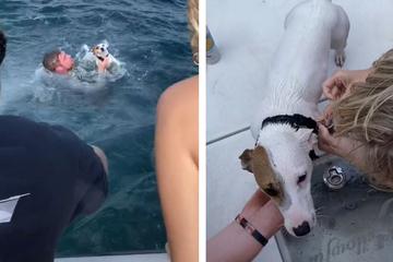 Freunde platt! Hund schwimmt mitten im Ozean: Dann finden sie heraus, was passiert ist