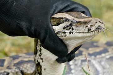 Schlangen-Alarm in Sachsen-Anhalt! Drei Meter lange Python entwischt