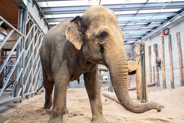 """Elefant, Tiger & Co."": Eine alte Dame sagt ""Adieu!"""