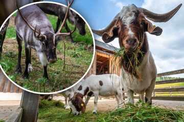 Tierpark Waschleithe: Tierisch schöne Stunden im malerischen Oswaldtal