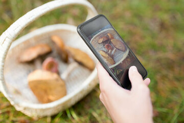 Pilze mit Google oder per App bestimmen? Giftnotruf warnt!