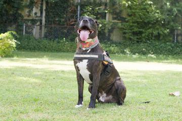 Hund nach Tornado vorm Tod gerettet: Jetzt ist er selbst Rettungshund