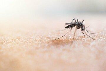 Summer-Time: Steht jetzt auch noch eine Mücken-Invasion bevor?