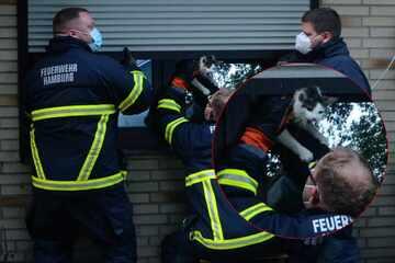 Hamburg: Katze wird von Fensterrollo eingeklemmt und muss von Feuerwehr befreit werden