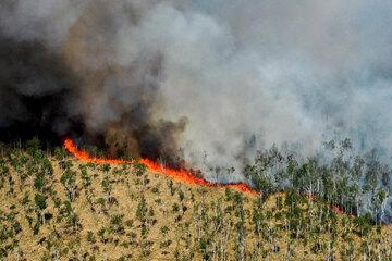Fläche mit Munition belastet: Waldstück in Heidesee steht in Flammen