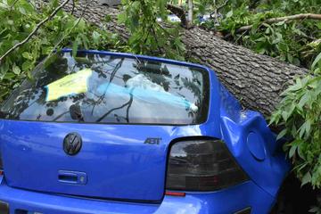 Schwere Schäden durch umgestürzten Baum: Gleich mehrere Autos betroffen