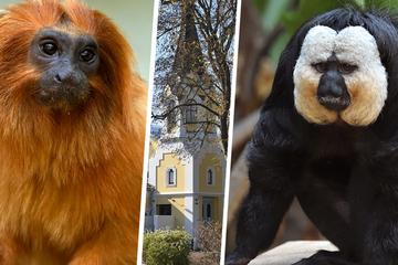 Die Tiere sind los: Dschungel-Erlebniswelt im Kölner Zoo eröffnet!