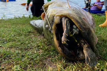 Wills se ahoga con la tortuga - poco después ambos mueren