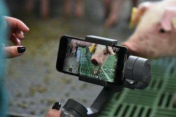"""Kameras im Ferkel-Stall! Das hat es mit Projekt """"DigiSchwein"""" auf sich"""