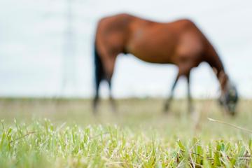 Pferdeschänder sticht zu: Stute im Genitalbereich mit Messer verletzt!