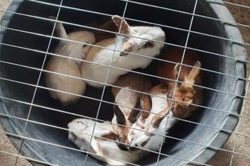 Se encontraron 13 conejos en un estado miserable: así son ahora