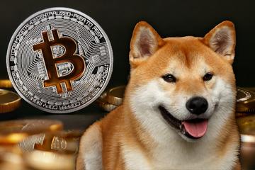 Wachstum von 42 Millionen Prozent! Scherz-Coin wird zu einer der wertvollsten Kryptowährungen