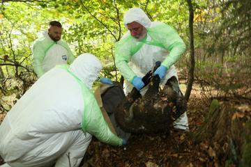Afrikanische Schweinepest in Sachsen: Bayern wappnet sich mit Hunden