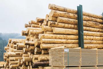 Warum der Holzboom Nachteile für den Südwesten hat