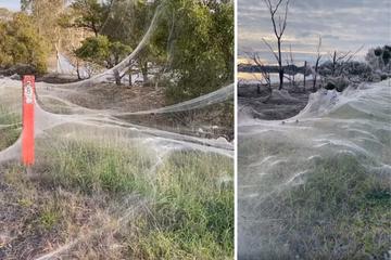Nach heftigen Überschwemmungen: Ganze Landschaft plötzlich von Spinnweben überzogen