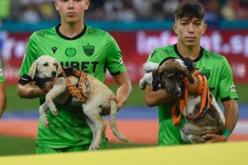 Bitte adoptieren: Fußballer laufen mit Straßenhunden ein
