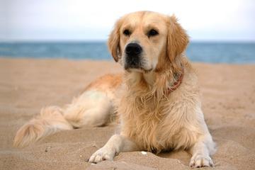 Tier verschollen! Profi-Hundesitter verliert Labrador ohne Leine: Das ist die Strafe!