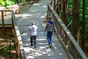 Neue Attraktion auf Usedom: Baumwipfelpfad wird feierlich eröffnet
