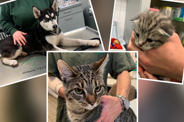 Tierische Findelkinder suchen in Hamburg ihre Besitzer: Für einen Kater kam jede Hilfe zu spät