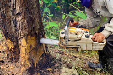 Tragischer Fund: 68-Jähriger liegt tot neben gefälltem Baumstamm