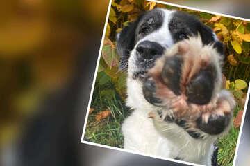 Braver Hund findet einfach kein Zuhause: Wer gibt ihm endlich eine Chance?