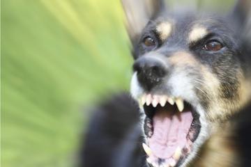Mann hetzt Hund auf Frau bei Gassi-Runde: 37-Jährige durch Bisse verletzt