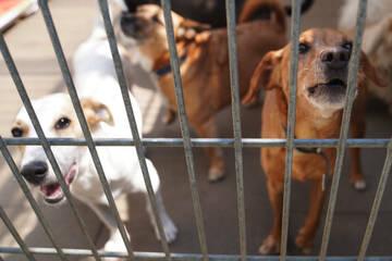 Tierheime befürchten Überfüllung nach Ende der Homeoffice-Pflicht