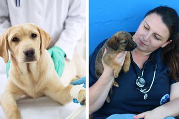 Ärztin schläfert fünf gesunde Hunde ein: So bitter sind ihre letzten Worte an die Tiere