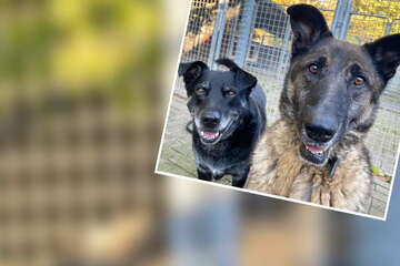 """""""Hinreißende Schurken"""": Diese beiden Hunde haben ein ganz besonderes Talent!"""