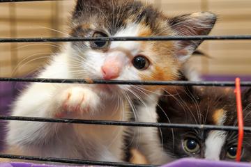 Lebensbedrohlicher Zustand: Tierärztin rettet 13 Katzen aus schlechter Haltung