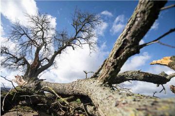 Nationalpark Harz rät von Waldbesuchen an stürmischen Tagen ab
