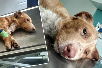 Bei lebendigem Leib! Tierquäler vergraben zwei Hunde mitten auf dem Feld