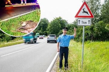 Achtung, Liebe macht blind! Polizei warnt vor Wildunfällen