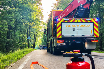 Dresden: 100 Quadratmeter Wald in Dresden in Brand