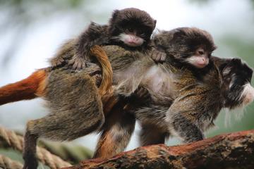 So niedlich! Im Tierpark Hagenbeck seht ihr einige Bewohner jetzt von ganz nah!