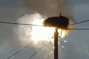 Zwei Jungstörche bangen nach Blitzeinschlag in ihrem Nest um ihr Leben