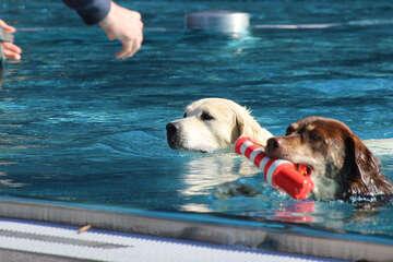 Badespaß zum Saisonende: Rund 700 Hunde planschen in Kölner Freibad