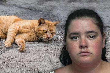 Frau schießt mit Pfeil und Bogen auf Nachbarkatze – der Grund macht sprachlos