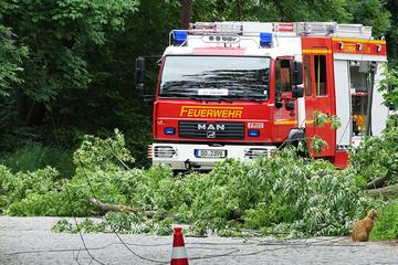 Dresden: Dresden: Baum fällt auf Stromleitungen und kappt Versorgung