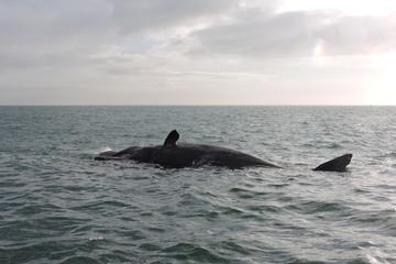 Fischer filmen toten Wal - dann explodiert das Tier plötzlich