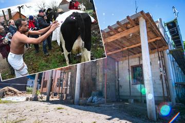 Nach Einverständnis einer Kuh: Bauarbeiten an Hindu-Tempel schreiten voran