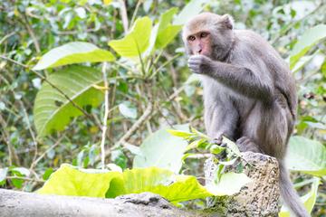 Wahres Alpha-Weibchen: Affe prügelt sich an die Spitze der Gruppe