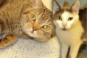 Im Tierheim gestrandet: Kater Joseph und Katze Emilia hoffen auf Happy End