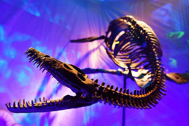 Bei dem Fund handelte es sich um einen Plesiosaurier wie diesen, der im Berliner Sea Life zu sehen ist.