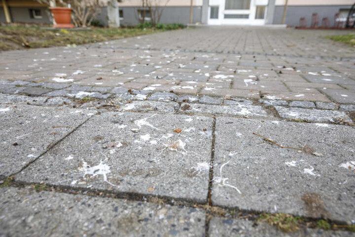 Durch herunterfallende Futterreste werden Ratten angelockt. Auch Taubendreck ist ein Problem.