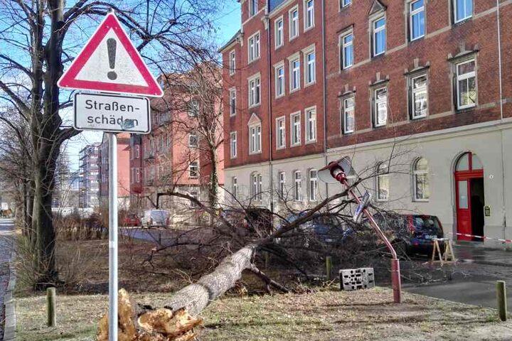 In der Baluschekstraße in Dresden hat der Orkan am Donnerstagmittag einen Baum umgeworfen.