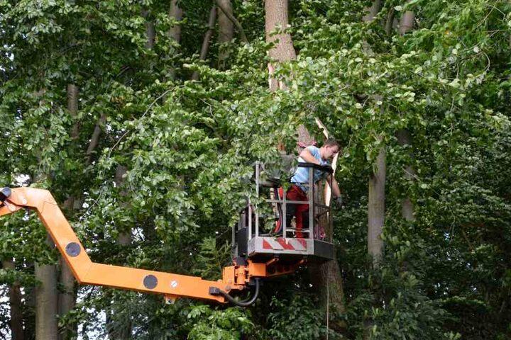 Am Mohns Park in Gütersloh wurde eine Baumkrone dermaßen verdreht, dass der Stamm zerbrach.