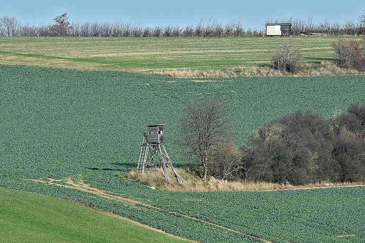 Ein Hochstand in der Nähe von Kreischa: Der Jäger schoss auf Wildschweine, traf aber einen Landwirt.