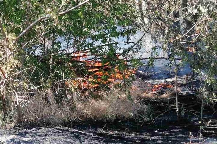 Auch in einem angrenzenden Waldstück brannte es.