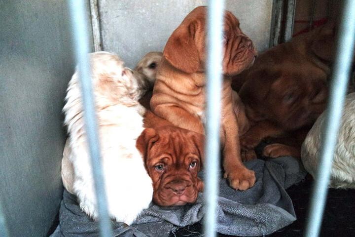 Die geretteten Welpen wurde in ein Tierheim in Nürnberg gebracht.